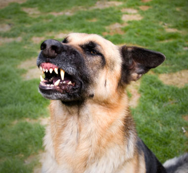 San Diego dog bite lawyer for personal injury claims after serious dog attacks